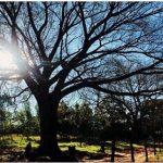 Der Baum des Volkes