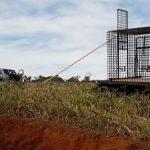 Kontroverse um freilaufende Löwen in Itapúa