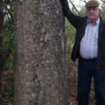 Kolosse der Erde: Palo Santo Baum im Chaco registriert