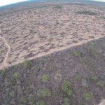 Abholzung in Paraguay und Argentinien betrifft Europa