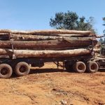 Null Abholzung: 3 bis 10 Jahre Gefängnis für illegale Waldrodungen