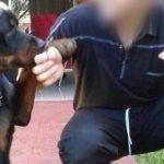 Nach Rottweiler-Angriff ringt ein Mann mit dem Tod