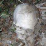Chaco: Knochenreste auf Estancia gefunden