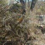 Chaco: Gestohlener Raupenbagger in Estancia entdeckt