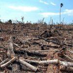 """Dekret zur """"Abholzung"""" aufgehoben"""