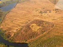 Entwaldung vom Gran Chaco schreitet ungehindert voran