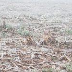 Eisiger Wochenbeginn in Alto Paraná