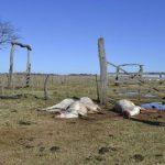 Rinder sterben auf seltsame Art und Weise