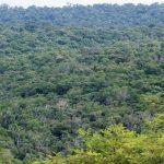 Moises-Bertoni-Stiftung: Ranger überfallen, einer wurde erschossen