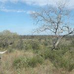 Ranger in Paraguay: Der Job kann tödlich enden