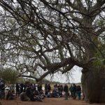 Ein Baum im Chaco ist neuer Koloss der Erde