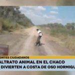 Misshandlung von Ameisenbär: Täter erwartet hohes Bußgeld