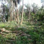Illegaler Waldschlag der ANDE angezeigt