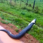 Riesenschlange erschreckt die Bevölkerung