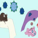 Hantavirus-Infektionen breiteten sich im Chaco aus