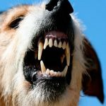 Streunende Hunde sind eine tödliche Gefahr