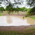Wenig Regen bereitet große Sorgen im Chaco