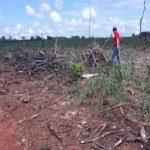 Waldrodungen in der Goldgräberstadt werden von der Staatsanwaltschaft untersucht