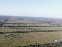 Chaco: 8.000 Hektar gerodet und Kriegswaffen beschlagnahmt