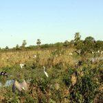 Die Produktion der Soja schadet nicht der Umwelt