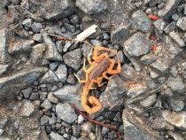 Vorsicht bei Skorpionen