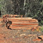 Zwei Mennoniten wegen Abholzung angezeigt