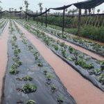 UGP: Nahrungsmittelproduktion bricht um 15% ein