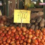 Tomaten werden Gold wert