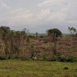 Kolonie Tirol: Massive Abholzung entdeckt