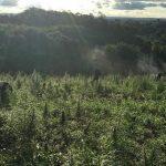 Zuschuss für Landwirte angedacht, um den Marihuana Anbau zu stoppen