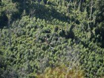 Vermarktung von Tropenholz: 6 Jahre Haft