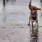 Tierliebe in seiner reinsten Form: Ein Foto geht um die Welt