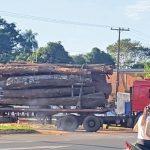Ausländer der Abholzung beschuldigt