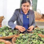 Nachhaltiger Yerba Mate Anbau gegen Soja: Stimmen Sie ab