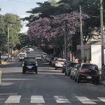 Lapachos schmücken die Stadt