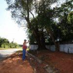 Der legendäre Baum unter dem Madame Lynch und Mariscal López Tereré tranken