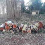 Campesinos zerstören Kulturflächen und roden Wälder