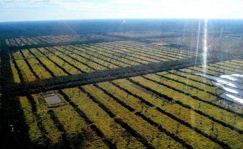 Produktivität und Klimawandel werden im Chaco analysiert