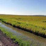 Dunkles Panorama für den Reisanbau