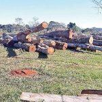 Waldrodungen durch Mennoniten