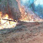 Höchste Waldbrandgefahr im ganzen Land