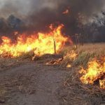 Chaco: Evakuierte Estancias und tote Tiere
