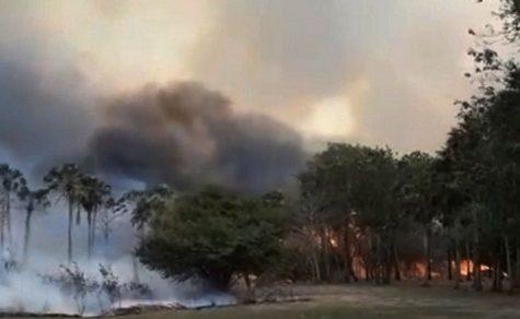 Waldbrand zerstört mehr als 480.000 Hektar Fläche im südamerikanischen Pantanal