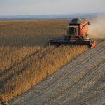 Einsatz von Agrochemikalien: UN verurteilt Paraguay