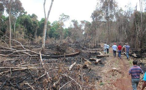 Ureinwohner kämpfen gegen Abholzung