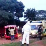 Bienenschwarm attackiert und tötet einen Mann