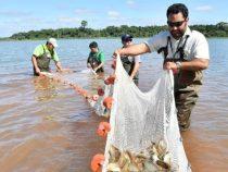 Neuer Rekord in der Fischproduktion
