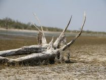 Die salzigen Lagunen im Chaco