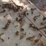 Finca 66: Massengrab auf Stroessner's Grundstück vermutet