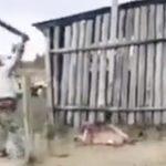 Chaco: Einen Puma zu Tode geprügelt
